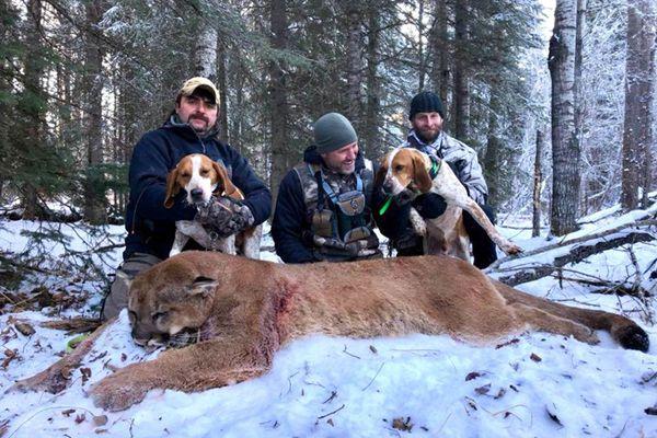 加拿大主持人残忍猎杀美洲狮 开心晒合影挨批