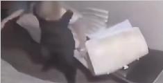 女子被捕踹门竟踢断美腿