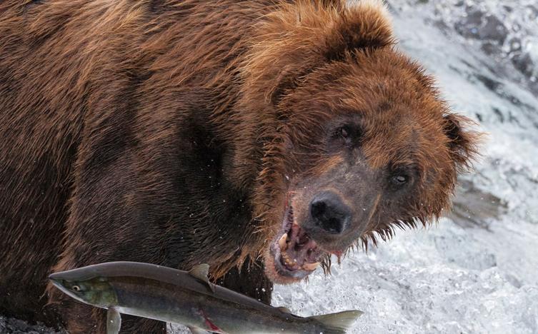 视觉盛宴:年度野生动物获奖摄影图片 自然的力量