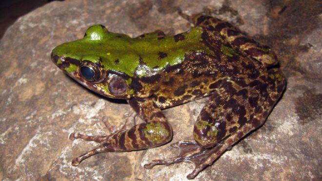 生物多样性萌发新希望? 湄公河流域发现100多类新物种