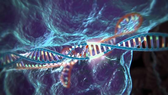 基因魔剪首批临床试验将展开 或明年在欧美进行