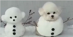 汪星人被疯狂恶搞 装扮成雪人十分可爱