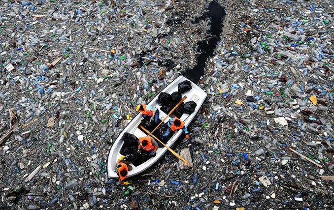 被塑料残害的海洋动物 你还会乱丢塑料袋吗