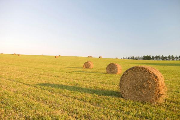 农业植保无人机莫入歧途,转型升级几成定局
