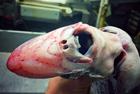 俄罗斯渔夫网晒深海怪鱼