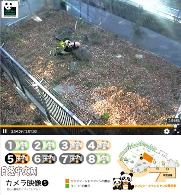 """日媒:大熊猫香香成日本网红""""主播"""" 视频网站股价涨停"""