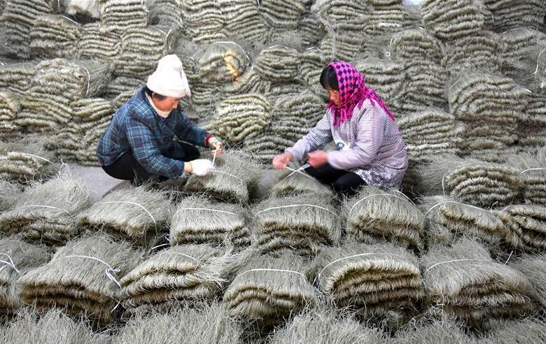 山东沂源:手工粉条节前加工忙