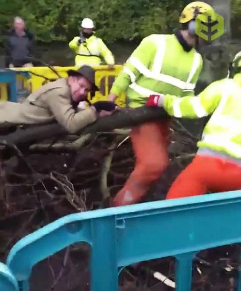 英环保分子紧抱被伐倒树木不放以示抗议