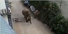 野象闯进普洱一村寨 撞门进入村民家中抢粮食