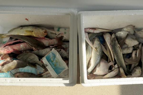 22种鱼21种检出异尖线虫 海鱼要做熟再食用