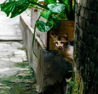 关注高校流浪猫 盲目的爱心也是伤害