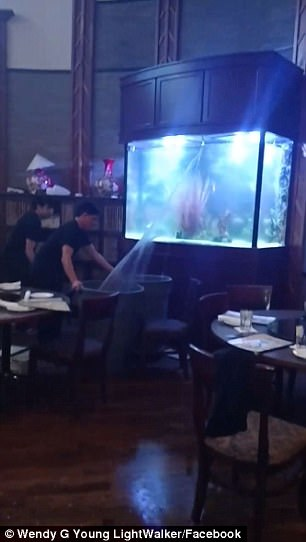 """美国餐馆鱼缸破碎现场上演""""喷泉表演"""""""