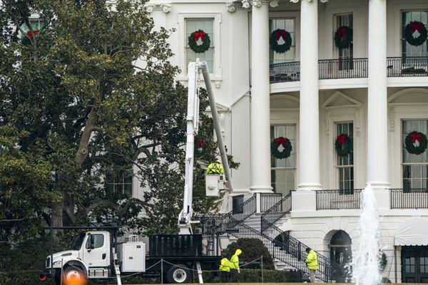 美第一夫人下令砍掉白宫最老杰克逊木兰树 系第7任总统种下