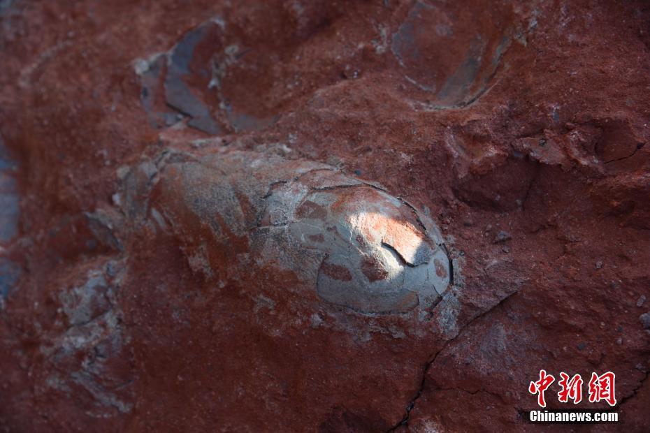 复活恐龙不是梦?中国发现1.3亿年前恐龙蛋化石