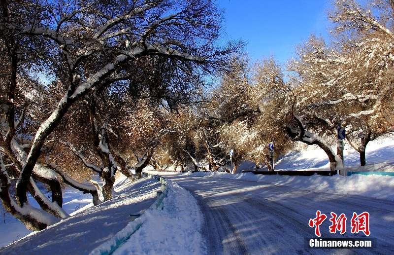 """媒体:新疆天池景区强降雪后变""""银色大道"""""""