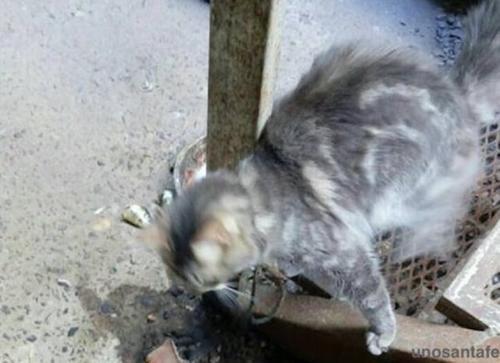 外媒:拴猫涉嫌违法!阿根廷华人被控虐待动物