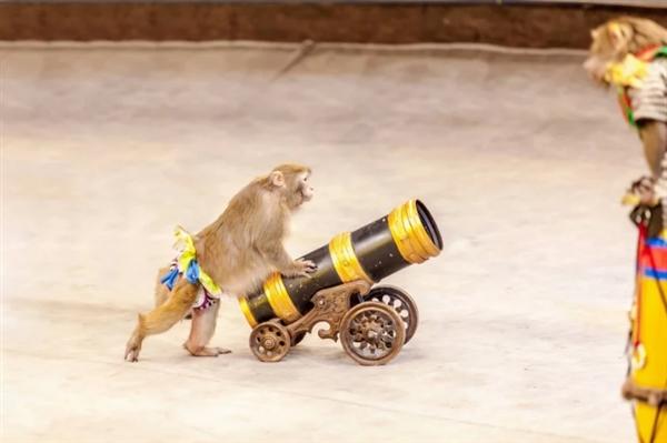"PETA立功 Shutterstock禁止""非自然""猿、猴照片"