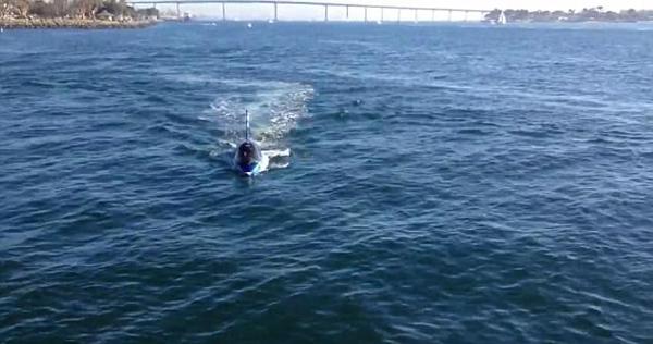 美国西海岸现仿真鲨鱼 潜水起跳样样行