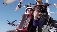 神奇的体验!坐飞机伸手就能摸到飞翔中的鸟