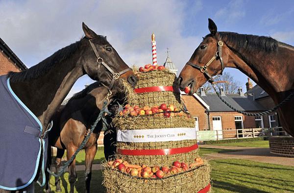 英马场纯种赛马集体过生日 享受三层大蛋糕