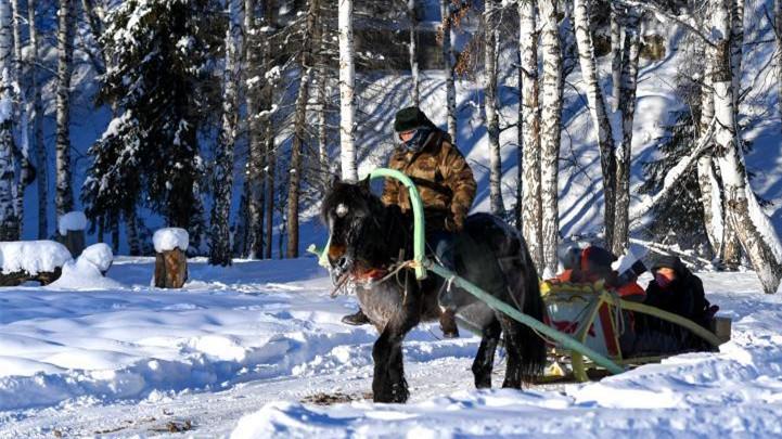 """新疆阿勒泰山区与众不同的""""马的"""""""