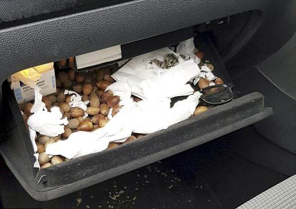 英男子汽车故障竟因松鼠将橡子塞满引擎