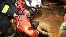 小女孩不慎掉入化粪池  被救出后抢救无效死亡