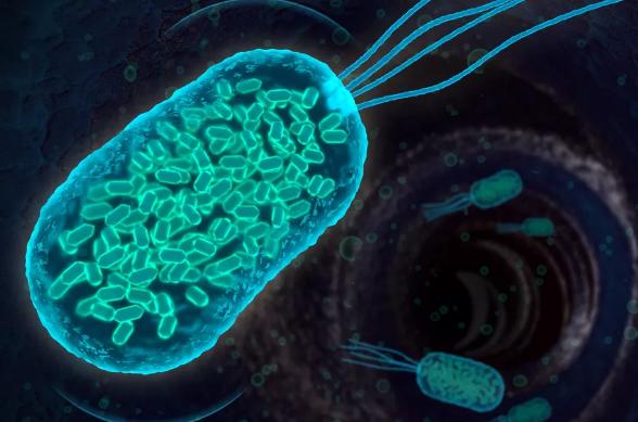 科学家利用声音追踪身体内的微生物