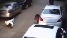 野猪闯小区!撞倒孕妇最终被击毙