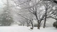 积雪过重压断树枝 女童经过时被当场被砸翻