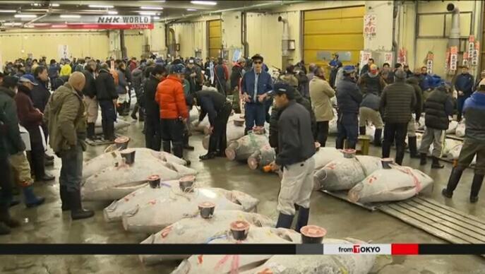 东京筑地市场新年首次竞拍 一条金枪鱼卖出209万人民币