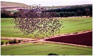 英国推行环境友好型农耕 鸟类数量或有望回升