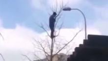 男子爬上高树欲轻生 现场救援人员赶到一脸懵