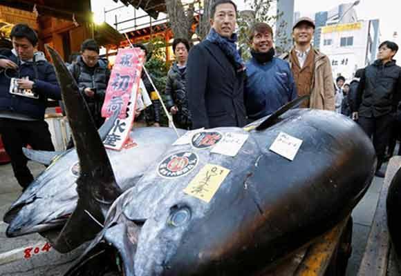 日本鱼市新年首拍 巨型金枪鱼拍出210万元