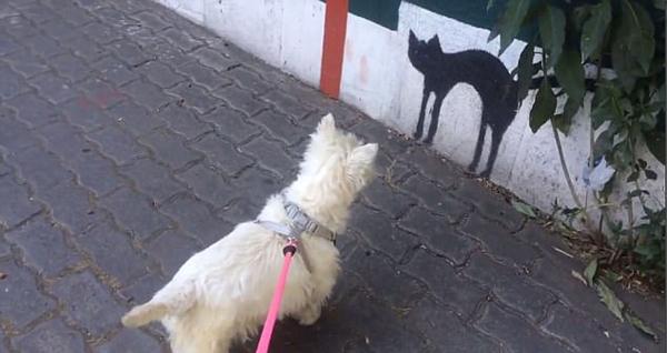 呆萌狗狗跟墙上猫咪画作对峙不肯走
