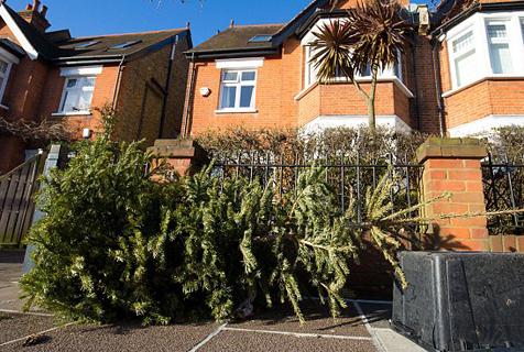 浪费!节后英国路边随处可见废弃圣诞树