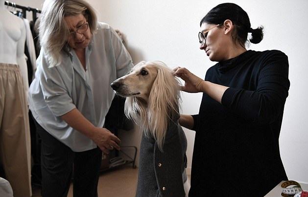 人不如狗:意大利宠物狗与主人穿同款定制服装出街