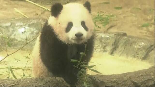 """日媒:上野动物园决定延长""""香香""""对外开放时间"""