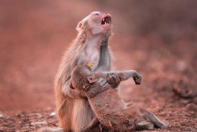 最感人的动物亲子照:母子互动充满爱意
