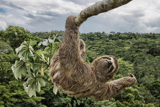 2017年野生动物摄影师大赛入围作品欣赏