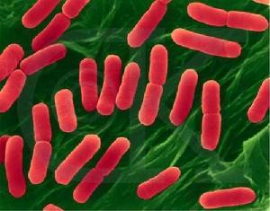 科学家用大肠杆菌转化二氧化碳 可减缓气候暖化