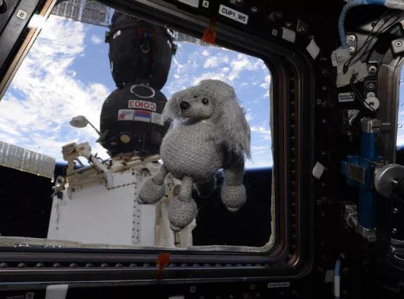 """国际空间站迎来新""""居民"""":可爱的毛绒玩具狗"""