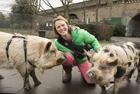 伦敦女子养两头宠物猪