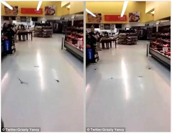 """惊!美国一沃尔玛超市被数十只蝙蝠""""占领"""""""