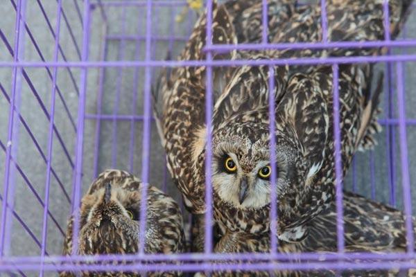 浙江苍南公安查处一起涉嫌非法猎捕野生动物案