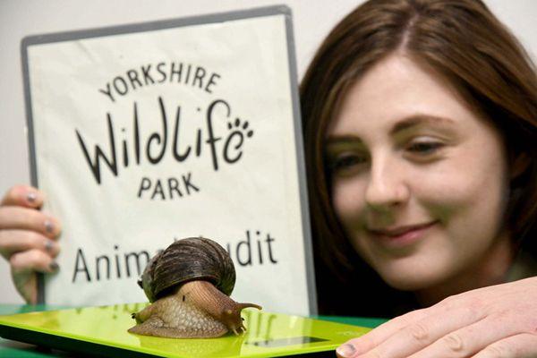 英国动物园年度体测 小动物量身高称体重