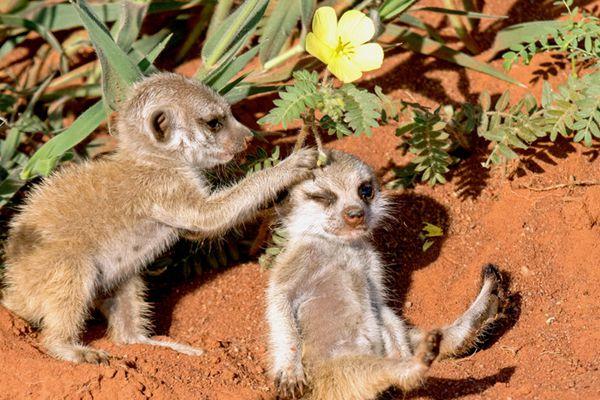 看看最暖的小动物友爱照 感觉瞬间就被治愈了