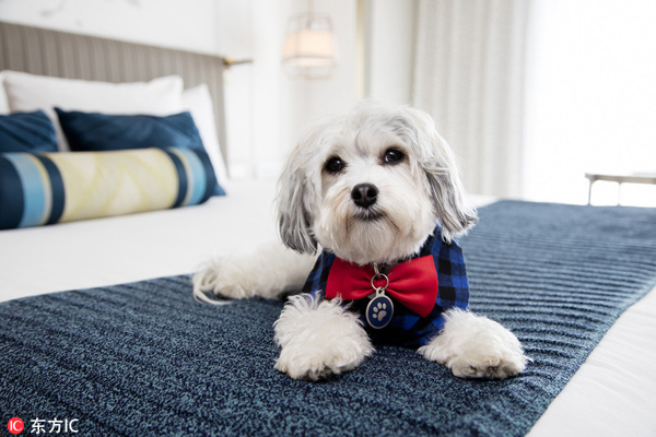 """美酒店提供""""狗狗陪伴服务"""" 为独居客人送温暖"""