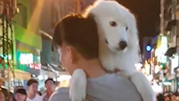 撒娇狗狗最好命!越南大狗被主人抱着逛街一脸宠溺