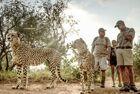 南非仨猎豹兼职当导游